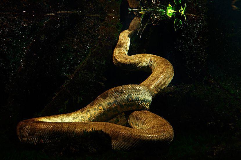 Anaconda World Snake Day 2017