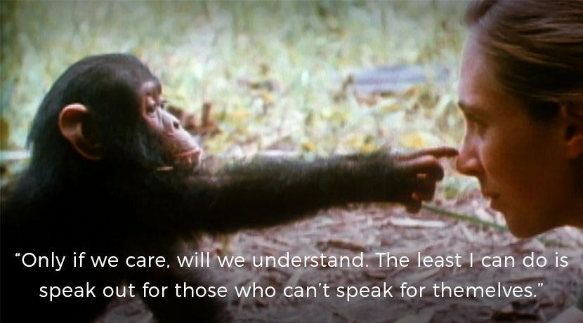 Jane Goodall National Geographic
