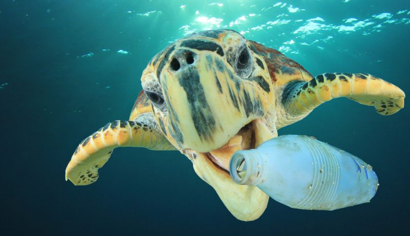 Turtle Biting Plastic Bottle