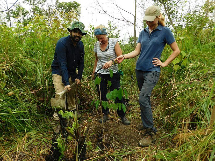 Reforestation in borneo