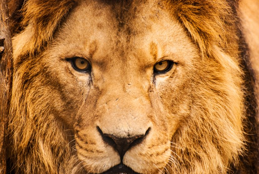 The Debate On Kevin Richardson Have Your Say The Great