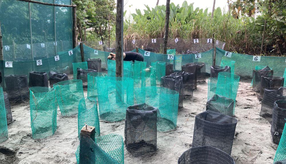 Turtle Hatcheries