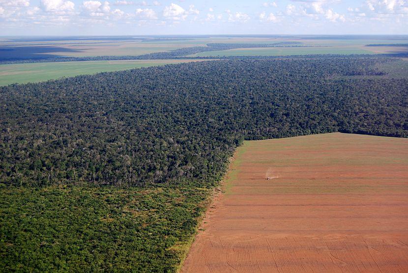 Deforestation In Rainforest