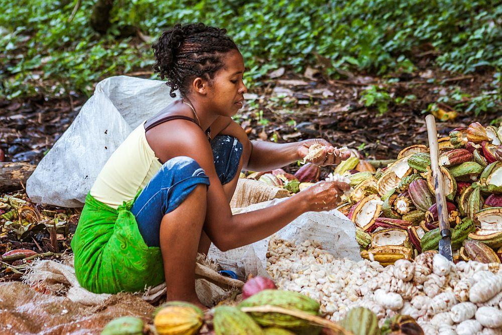 Cocoa Farming and Cocoa Production