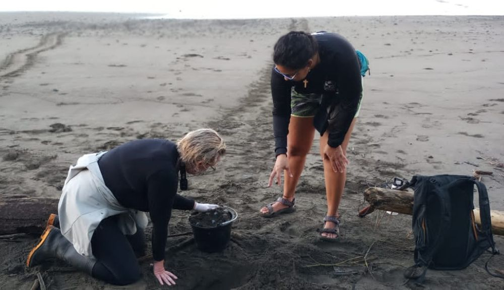Volunteering On The Costa Rica Turtle Conservation Experience