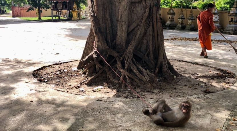 Macaque rescued from temple