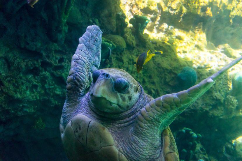 sea turtle images