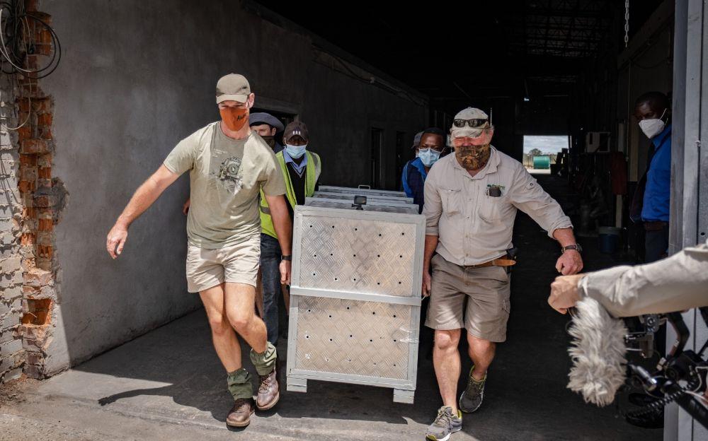 Kumbe and Jabari Being Transported