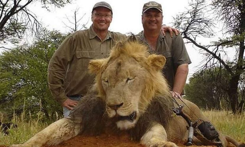 Trophy Hunting Lions