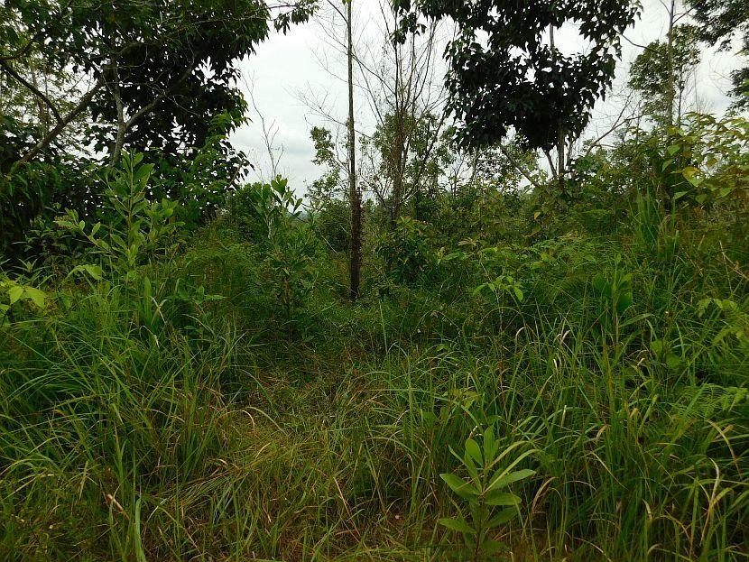 Reforestation Area