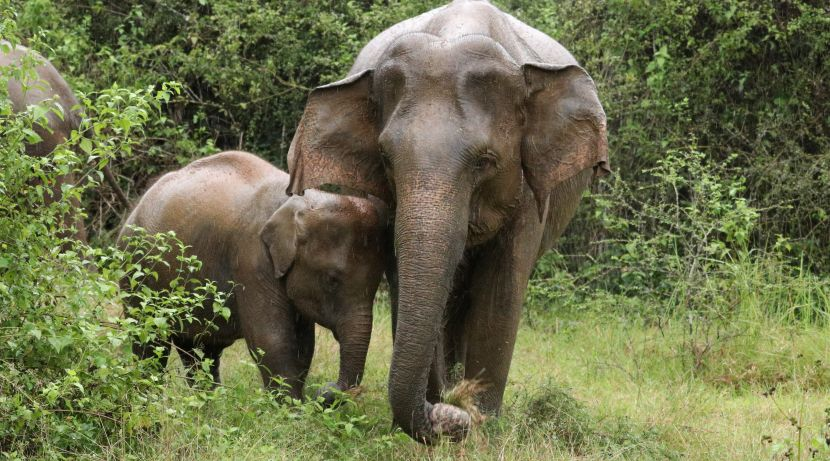 Elephant Mother and Baby at The Great Elephant Project