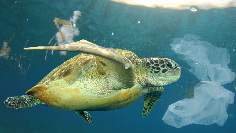 Turtle swimming amongst plastic in the ocean