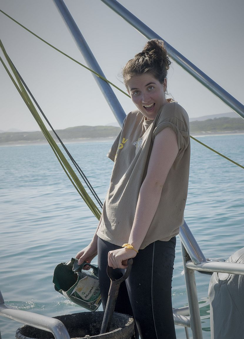 Great White Shark Volunteer