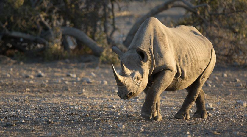 Volunteer with Rhinos