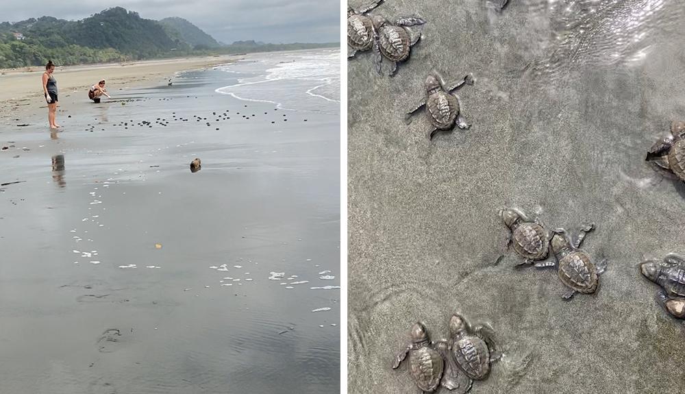 Volunteers Releasing Turtles