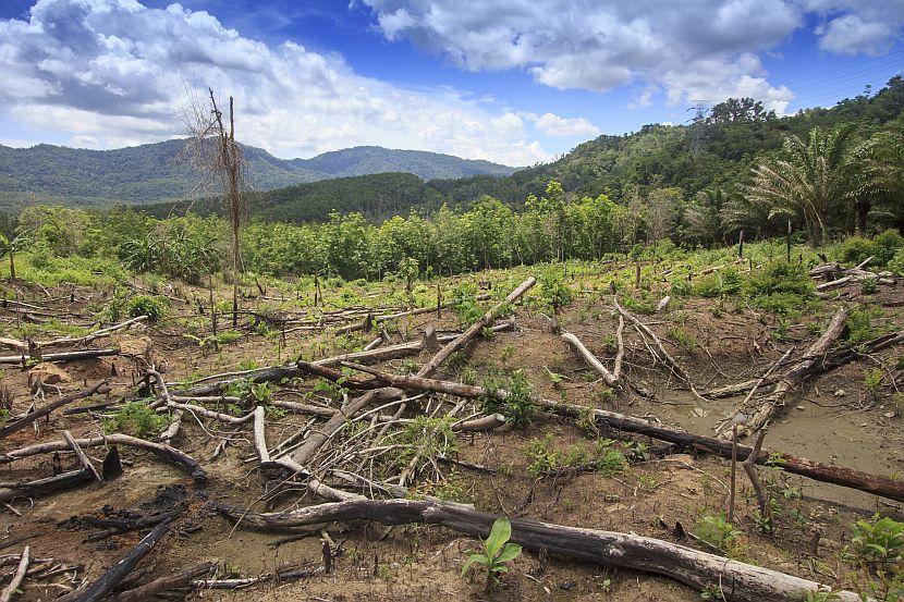 Borneo rainforest deforestation