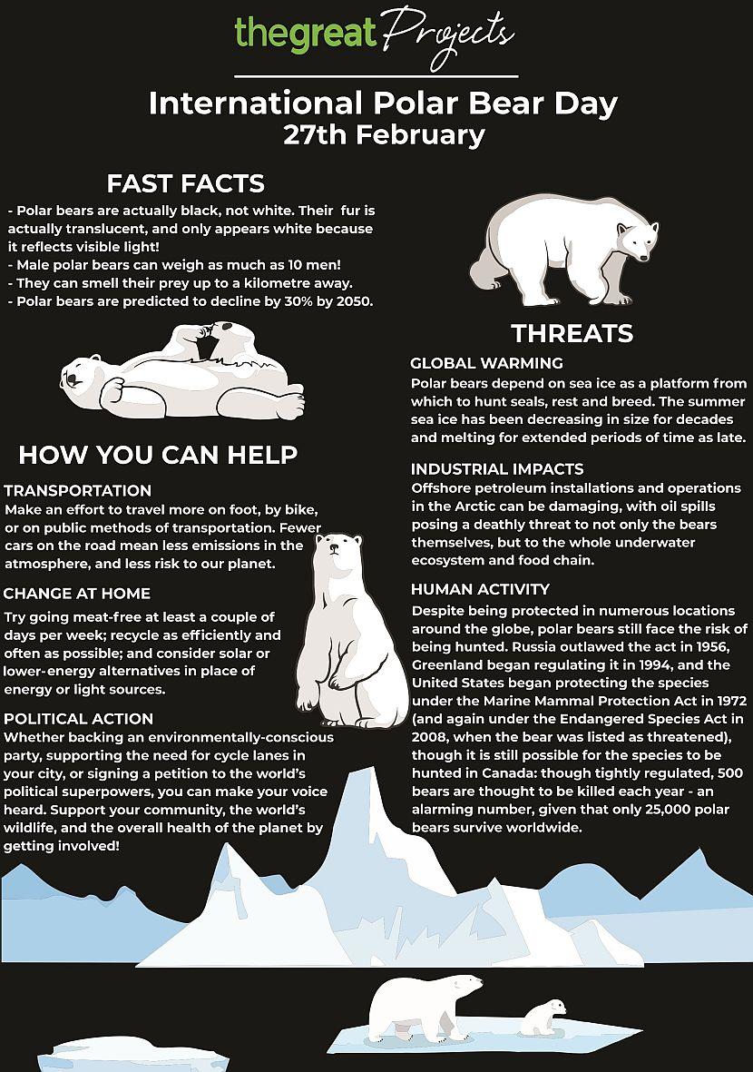 Polar bear day 2018 infographic