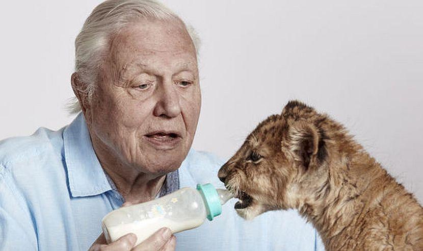 David Attenborough feeding cub