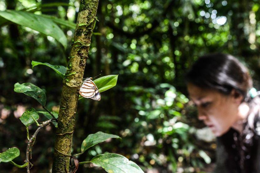 butterflies in the amazon rainforest volunteer opportunities abroad