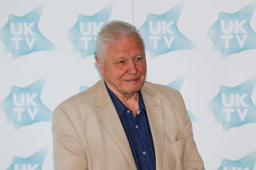David Attenborough tv awards