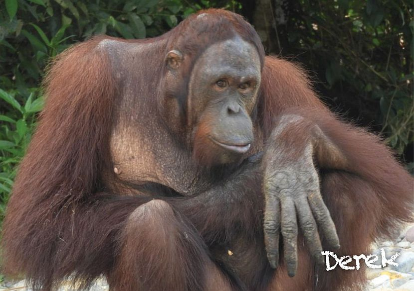 Samboja Lestari releases orangutans