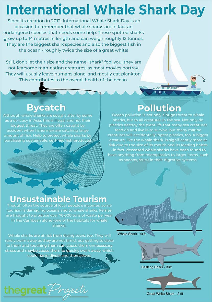 Whale Shark Day Infographic