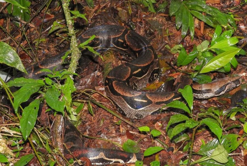 snakes in the amazon