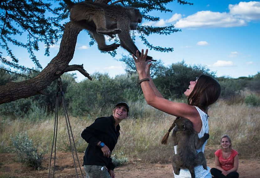 Volunteer with animals in Namibia