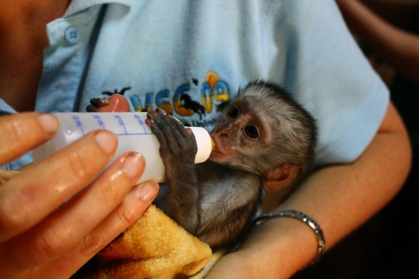 human hand rearing baby monkey