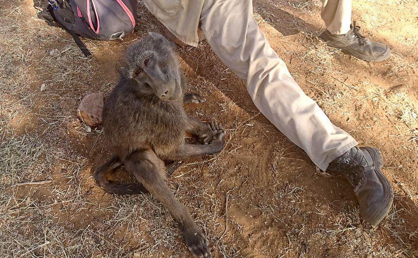 Shrinky Namibia Wildlife Sanctury