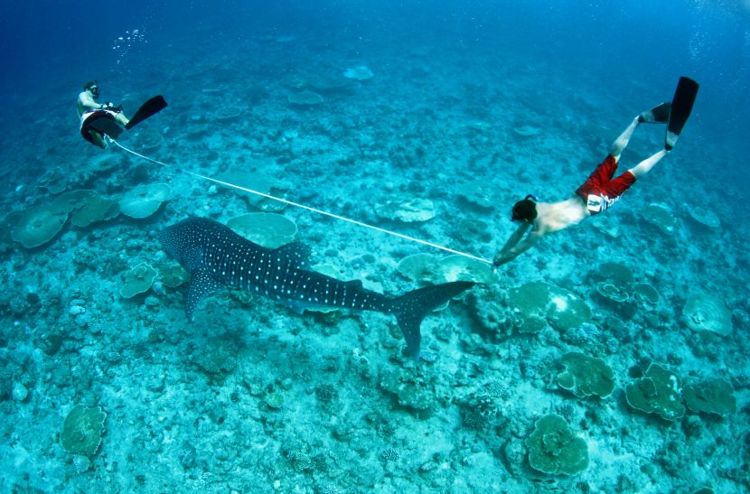 where do whale sharks live