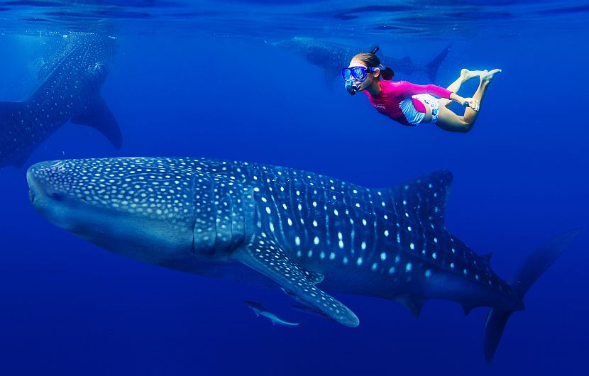 Girl swimming with whale shark