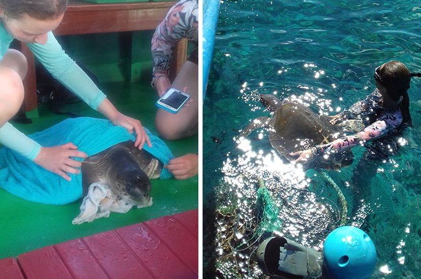 Turtle Rescue on the Whale Shark Research Project
