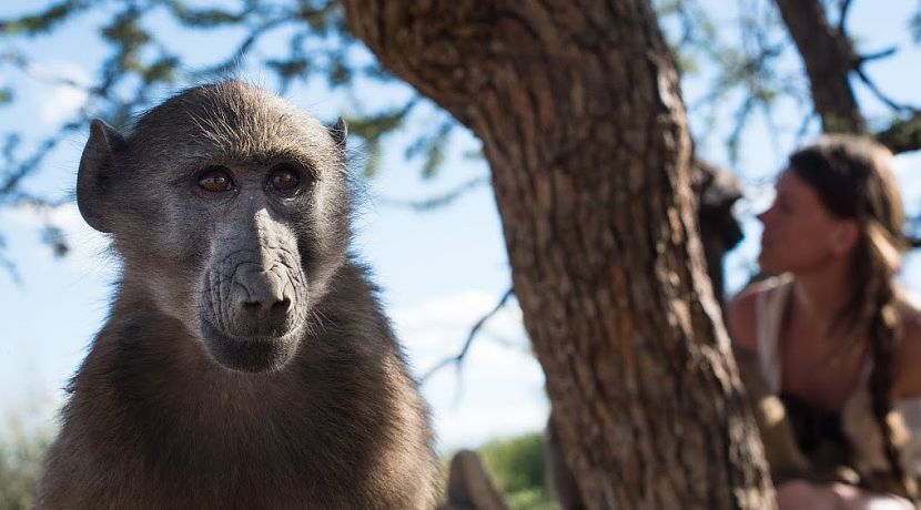 Baboon - Namibia Wildlife Sanctuary