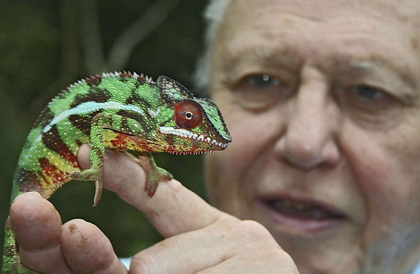 David Attenborough and animal